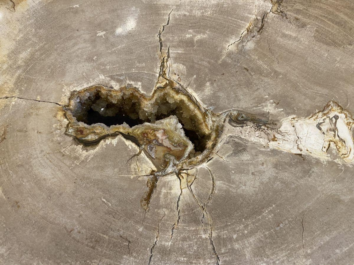 Couchtisch versteinertes Holz 34174