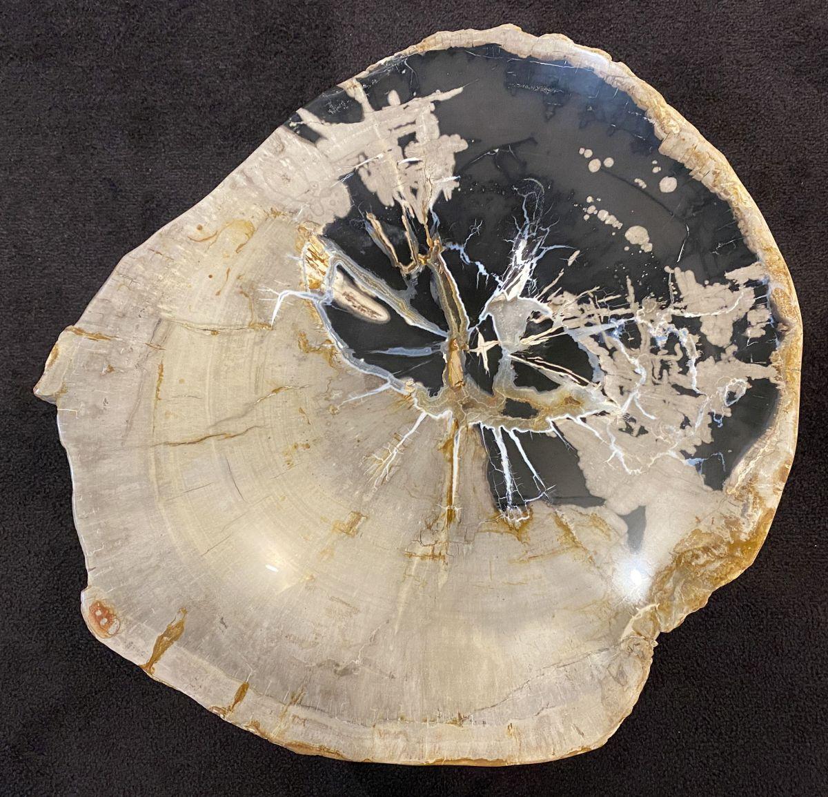 Couchtisch versteinertes Holz 34184