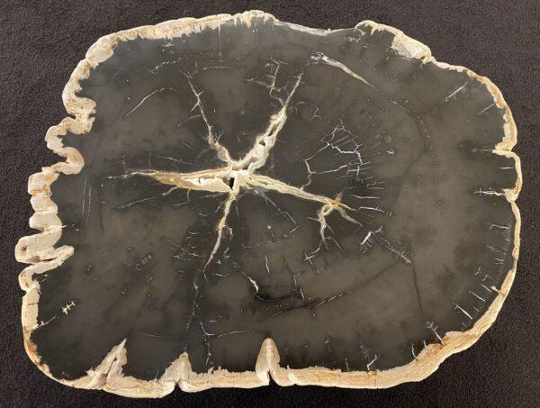 Couchtisch versteinertes Holz 34191