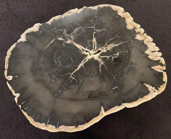 Couchtisch versteinertes Holz 34199