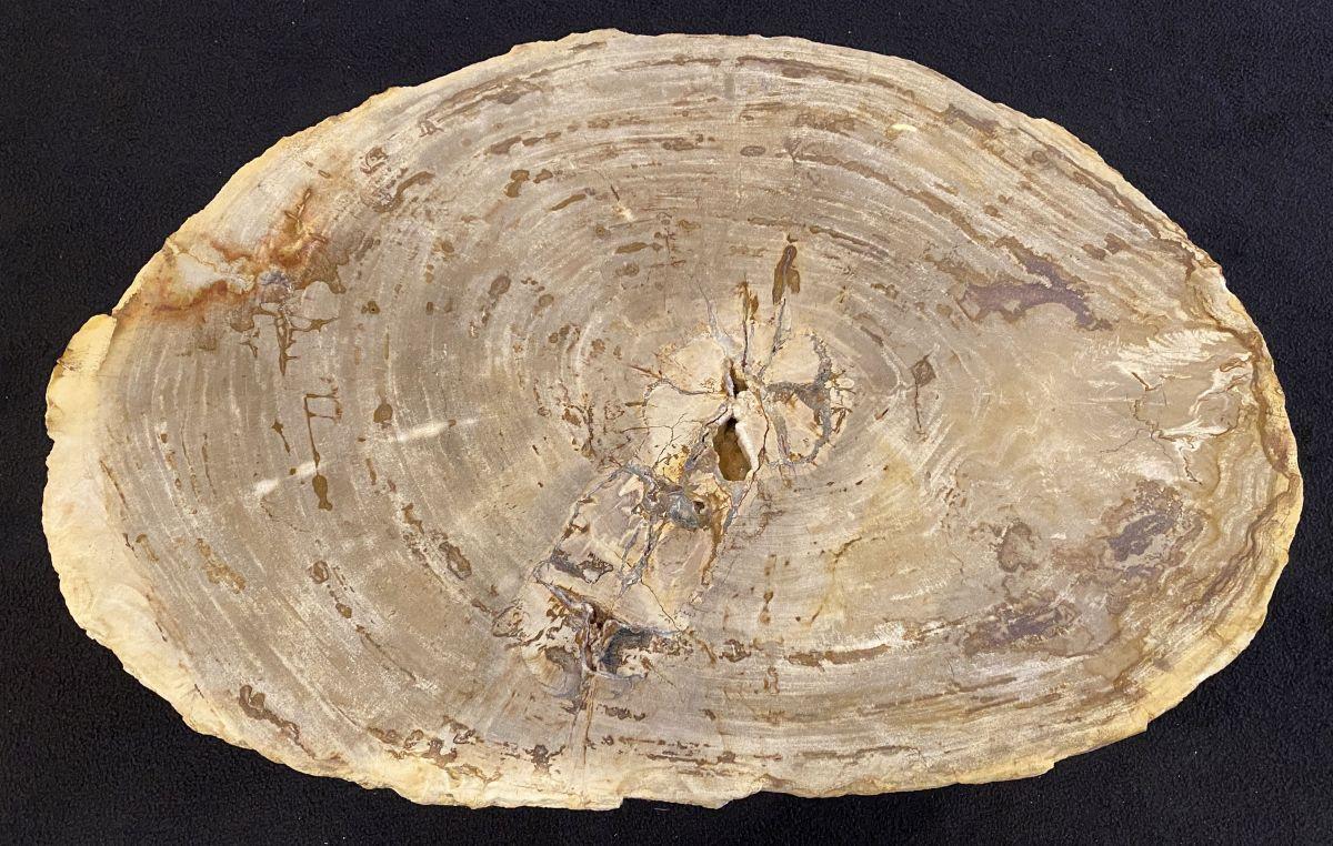 Couchtisch versteinertes Holz 34209