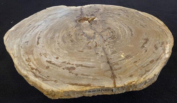Couchtisch versteinertes Holz 34211