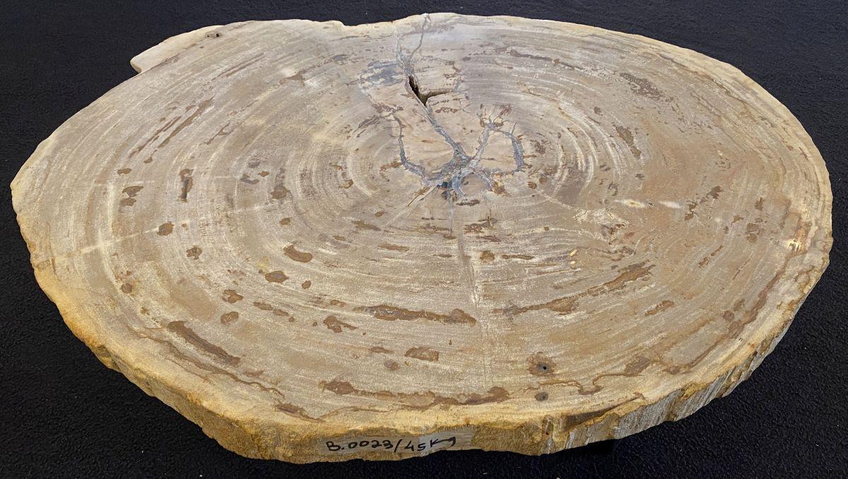Couchtisch versteinertes Holz 34212