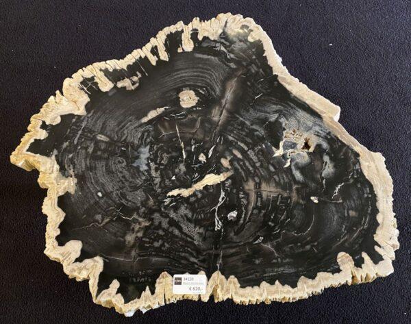 Couchtisch versteinertes Holz 34220