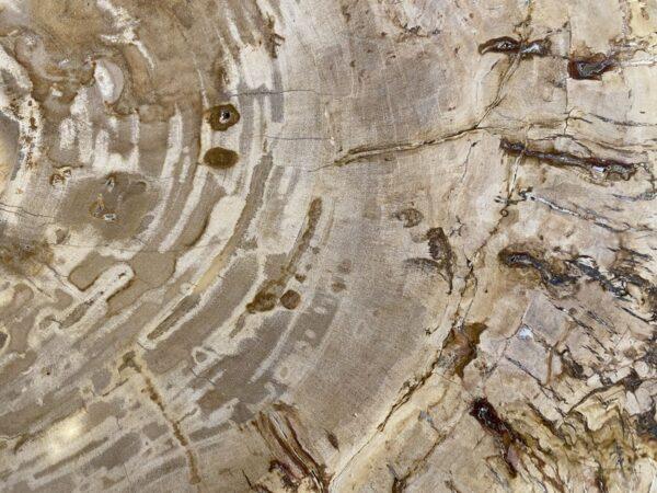 Couchtisch versteinertes Holz 34229