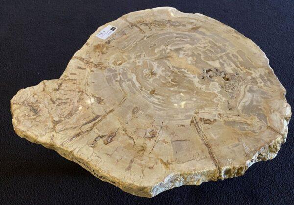 Couchtisch versteinertes Holz 34232
