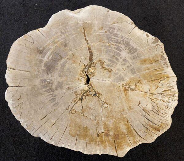 Couchtisch versteinertes Holz 34233