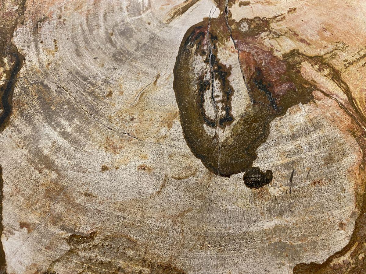 Couchtisch versteinertes Holz 34263