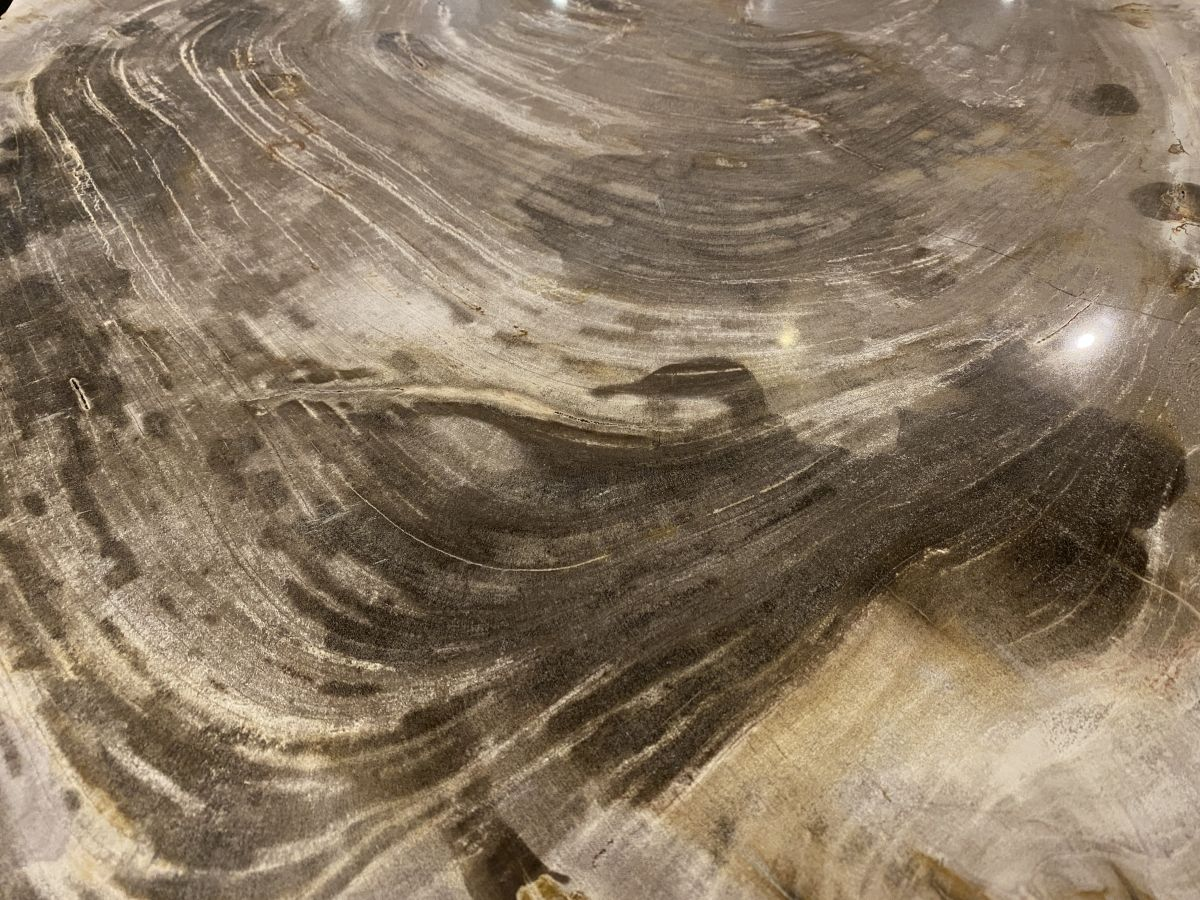 Couchtisch versteinertes Holz 34271
