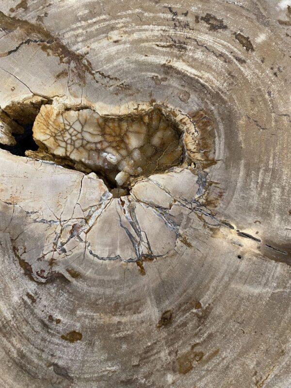 Couchtisch versteinertes Holz 34272