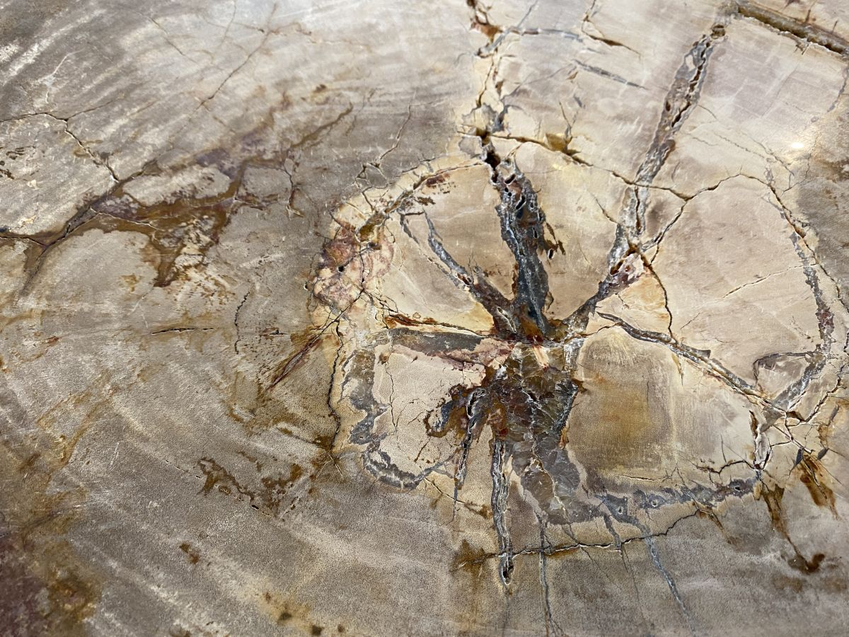 Couchtisch versteinertes Holz 34273