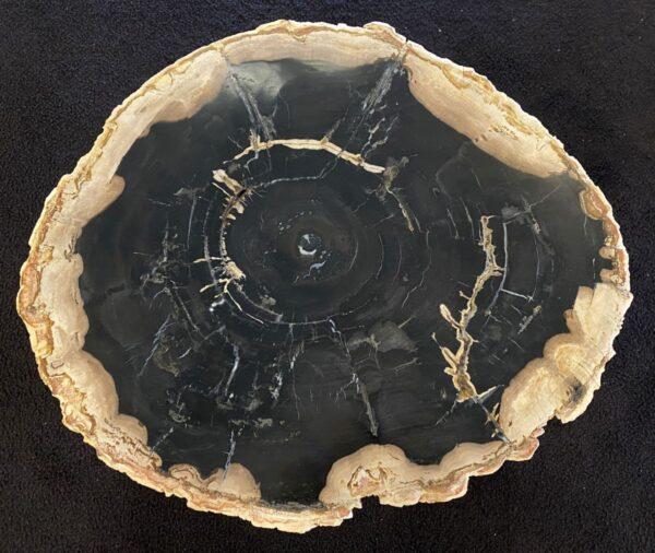 Couchtisch versteinertes Holz 34301