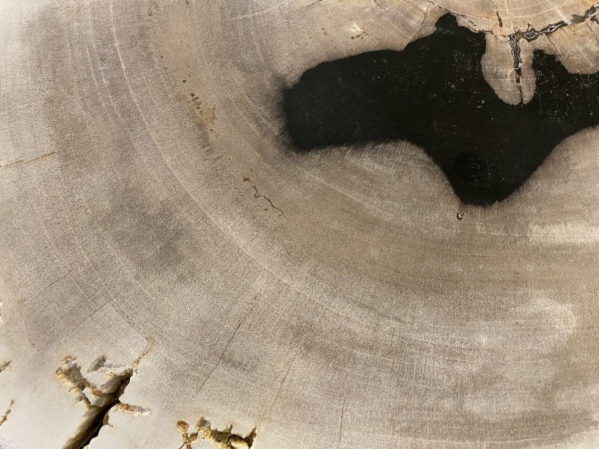 Couchtisch versteinertes Holz 34386a