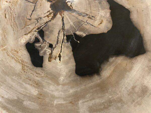 Couchtisch versteinertes Holz 34386c