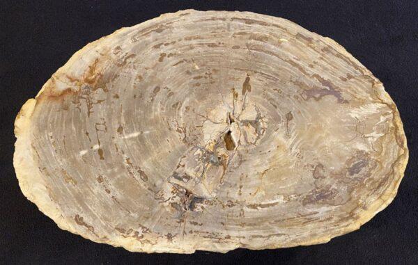 Mesa de centro madera petrificada 34209