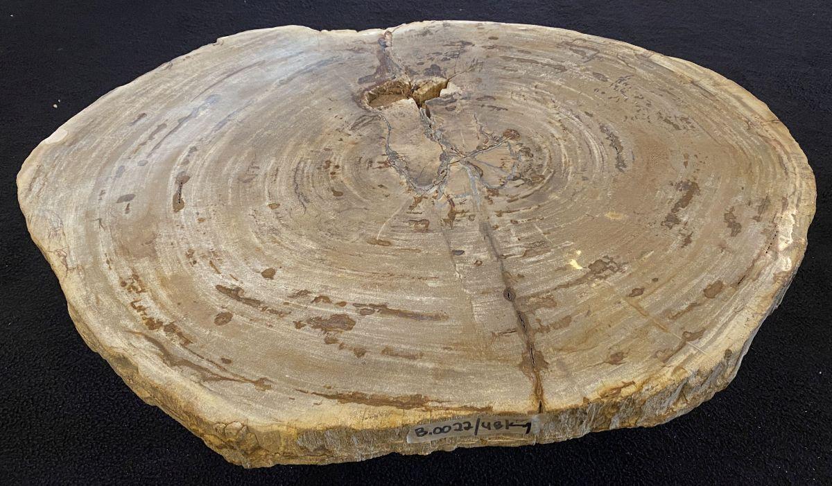 Mesa de centro madera petrificada 34211