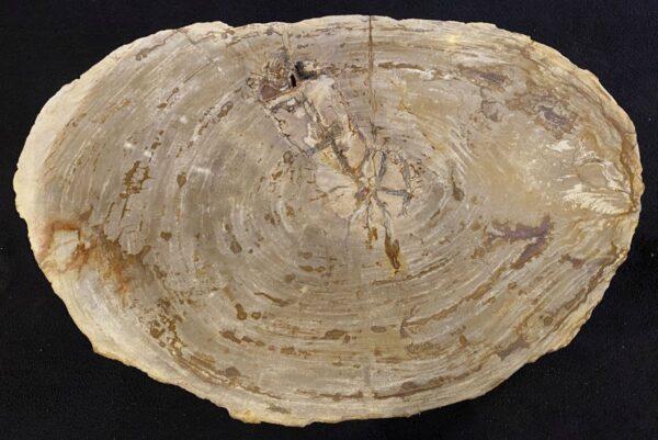Mesa de centro madera petrificada 34216