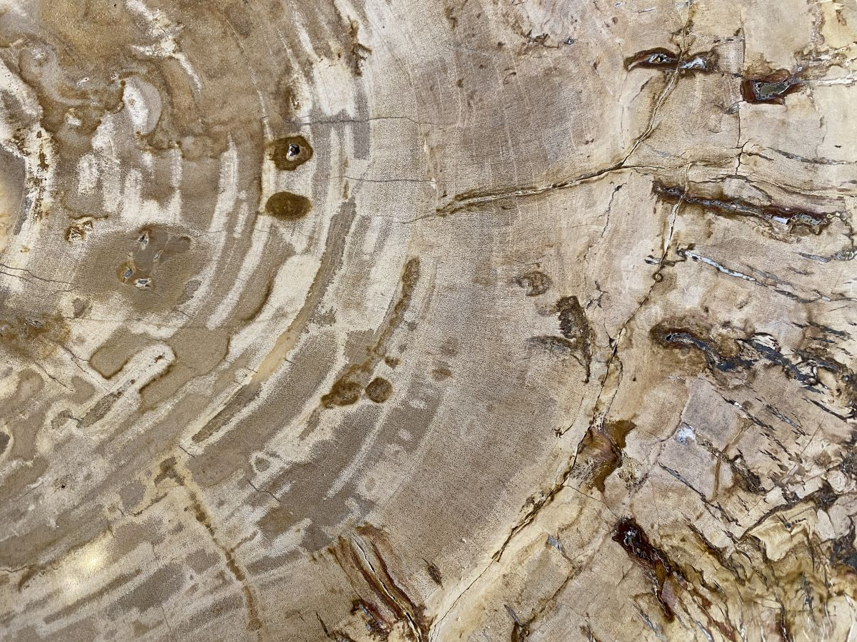 Mesa de centro madera petrificada 34229