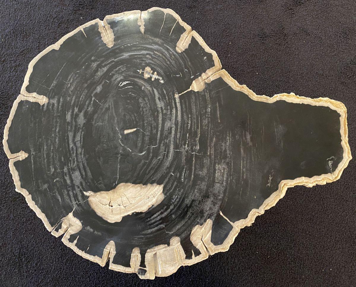 Mesa de centro madera petrificada 34256