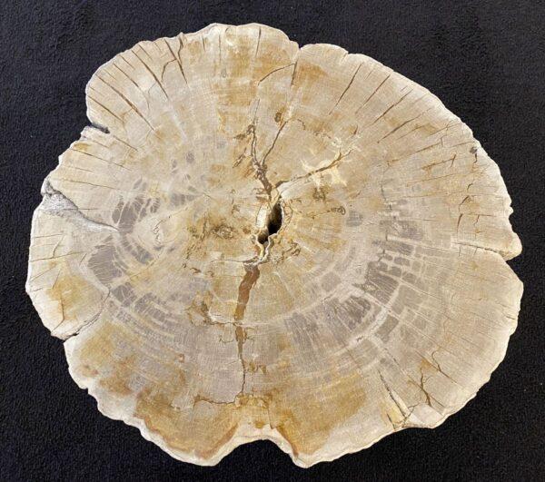 Mesa de centro madera petrificada 34260
