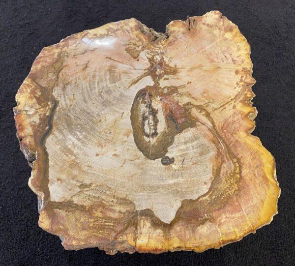 Mesa de centro madera petrificada 34263
