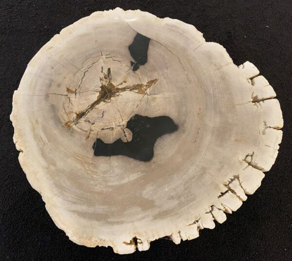Mesa de centro madera petrificada 34386d