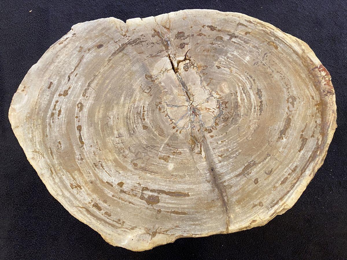 Salontafel versteend hout 34214