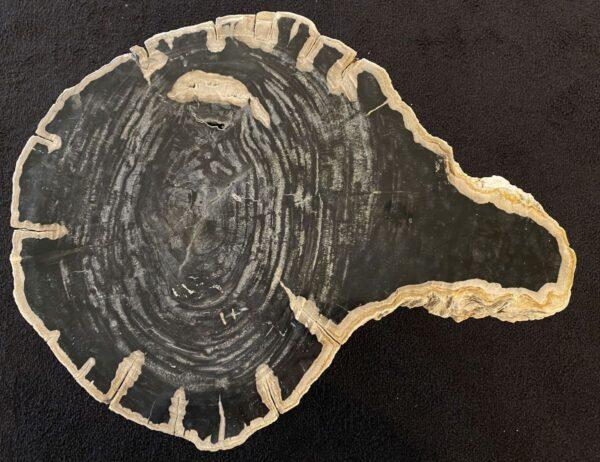 Salontafel versteend hout 34256