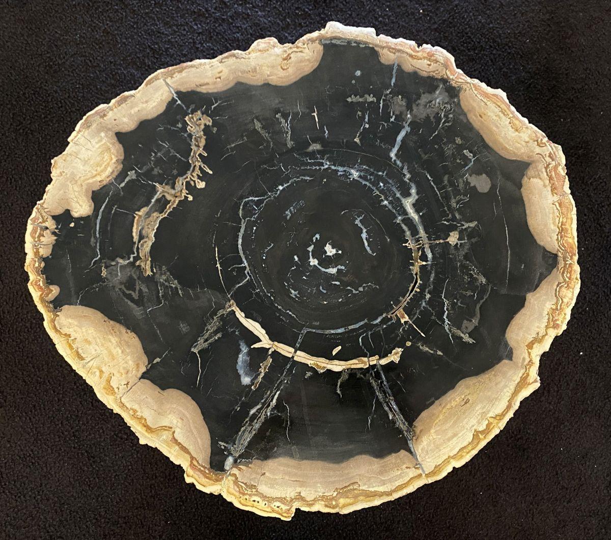 Salontafel versteend hout 34299