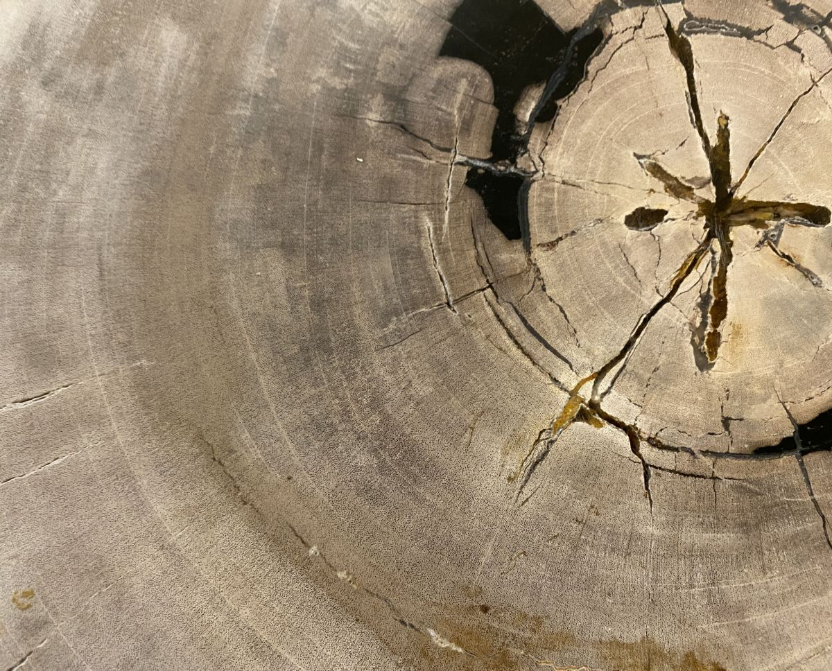 Salontafel versteend hout 34386b