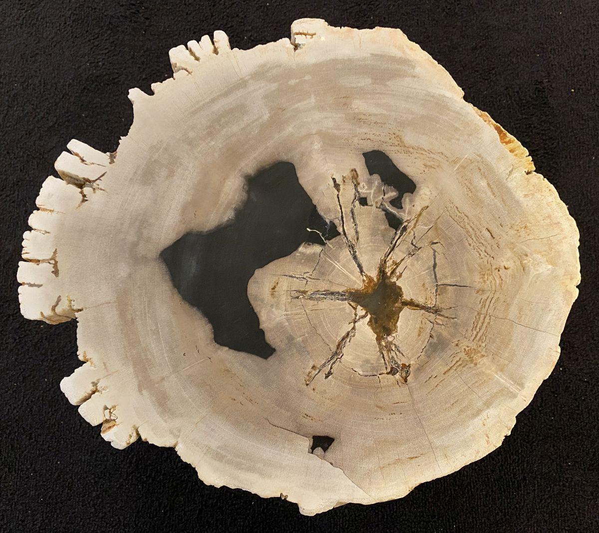 Salontafel versteend hout 34386c
