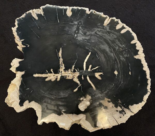 Table basse bois pétrifié 34165