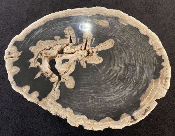 Table basse bois pétrifié 34200