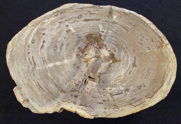 Table basse bois pétrifié 34212