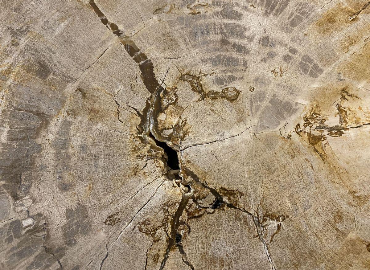 Table basse bois pétrifié 34233