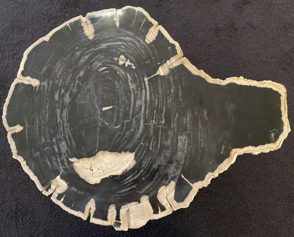 Table basse bois pétrifié 34256