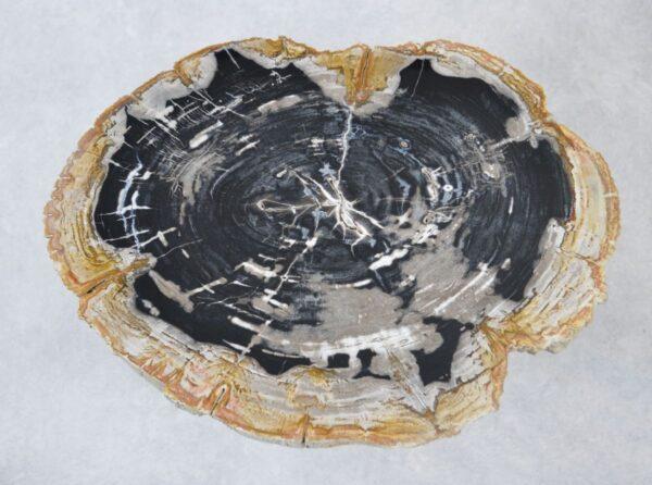 Coffee table petrified wood 35151