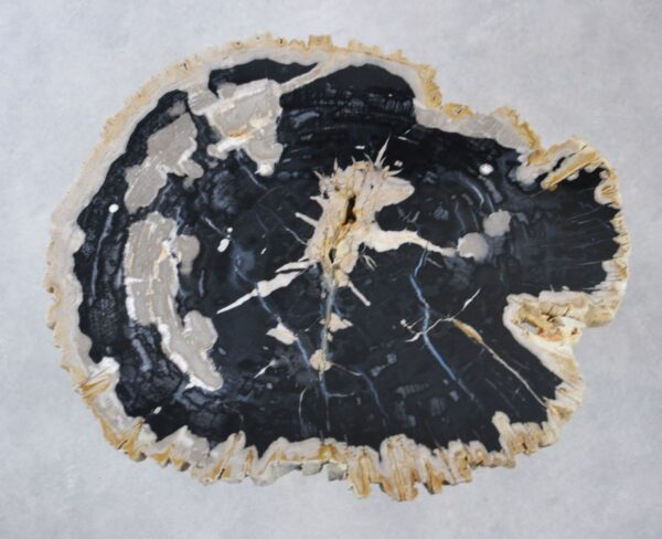 Coffee table petrified wood 35166