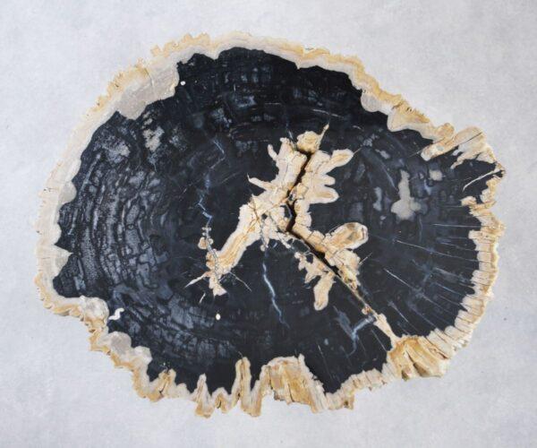 Coffee table petrified wood 35169