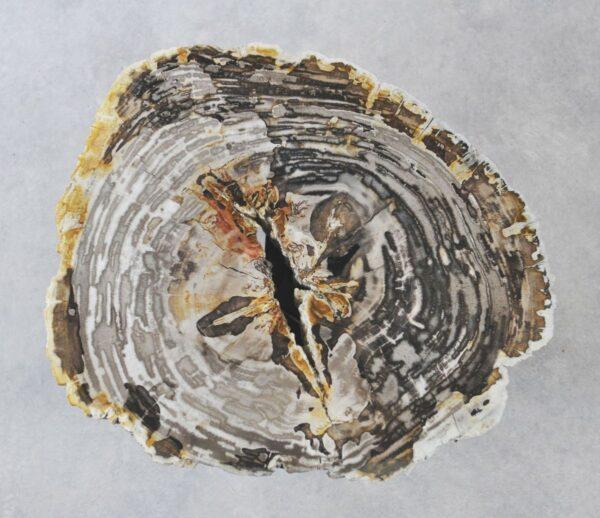 Coffee table petrified wood 35177