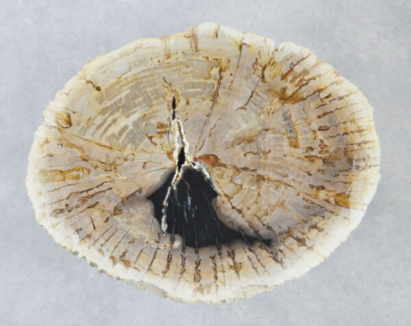 Coffee table petrified wood 35186