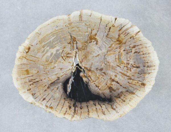 Coffee table petrified wood 35190