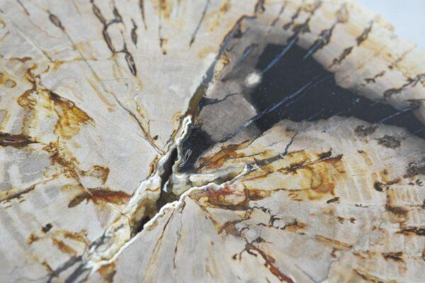 Coffee table petrified wood 35191