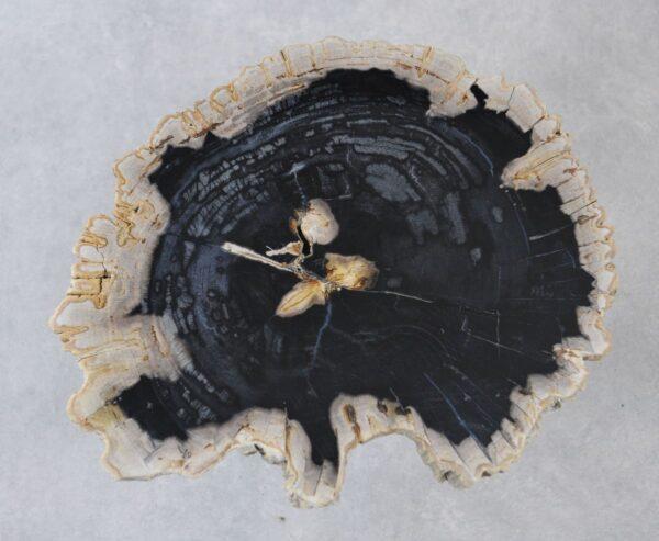 Coffee table petrified wood 35197