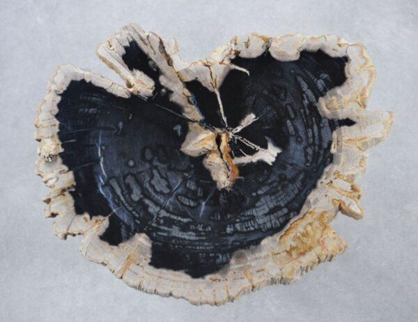 Coffee table petrified wood 35200