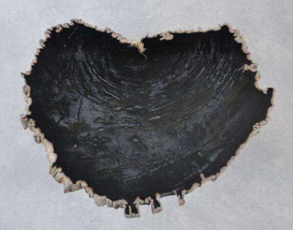 Coffee table petrified wood 35248