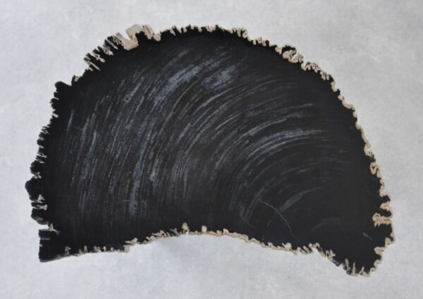 Coffee table petrified wood 35257