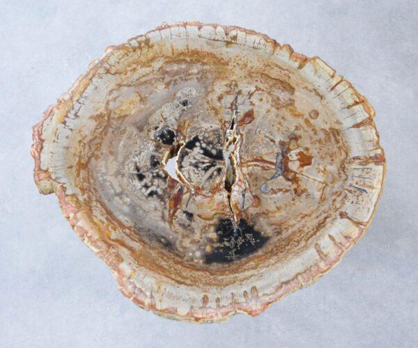 Coffee table petrified wood 35275