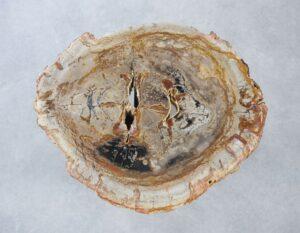 Coffee table petrified wood 35282