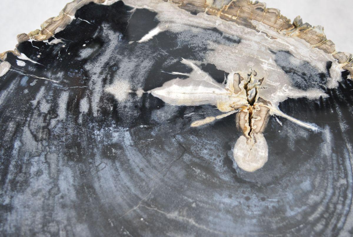 Couchtisch versteinertes Holz 35144